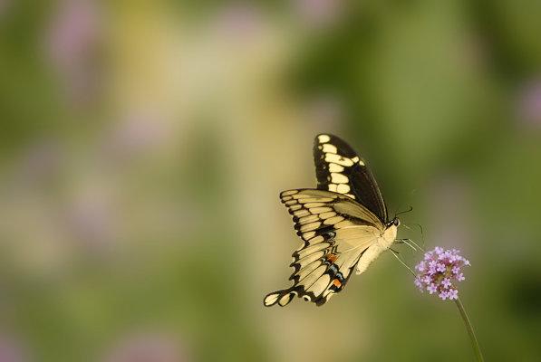 как фотографировать бабочек