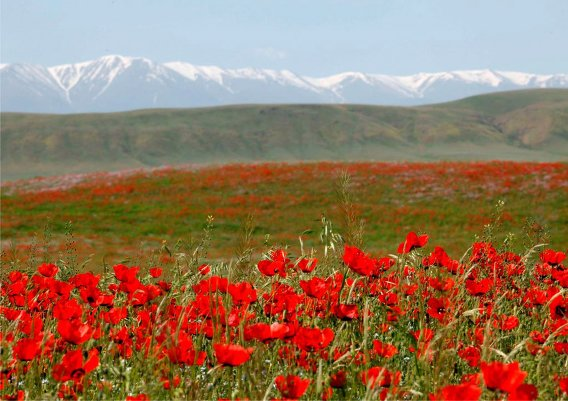 Приглашаем в орнитологическую экспедицию по Казахстану.