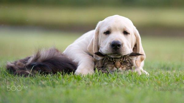 5 советов как сделать лучшую фотографию собаки или кошки
