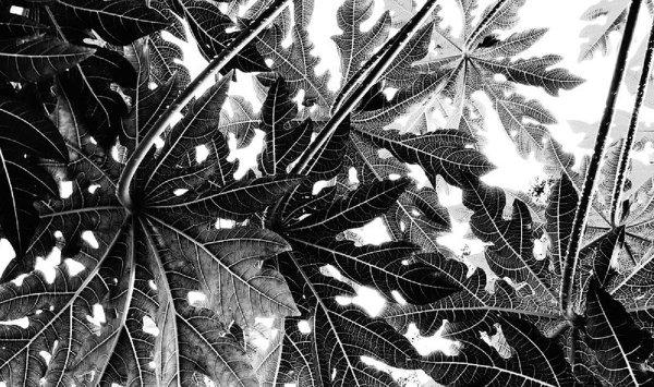 """Студенческое фото недели: """"Геометрия природы"""", Татьяна Ячменева http://disted.ru/"""