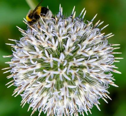 """Студенческое фото недели: """"Пчела"""", Макаров Дмитрий  http://disted.ru/"""