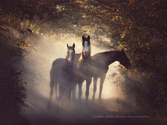Фотограф Wiebke Haas