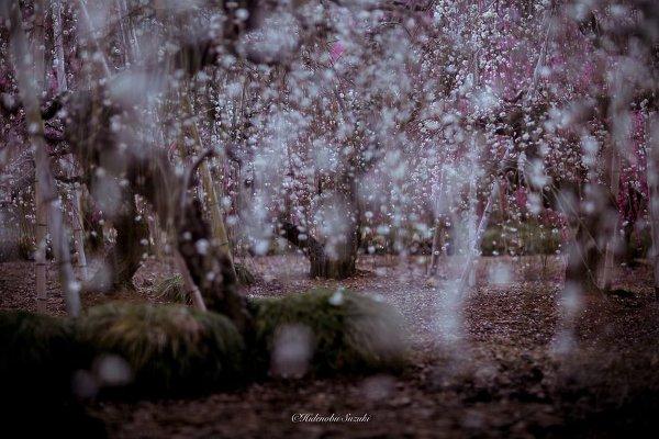 Фотограф Хиденобу Сузуки