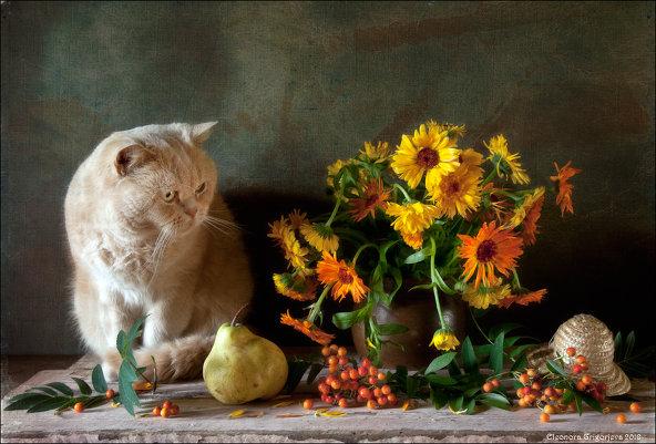 Фотограф Элеонора Григорьева