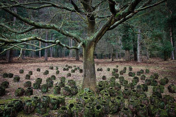 Пейзажи Великобритании от Элли Дэвис