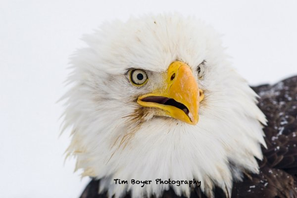 С чего начать новичкам, или как получить качественные изображения птиц?