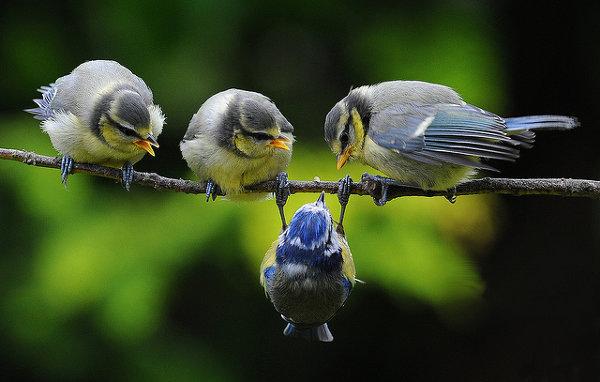 Решающий момент в съемке птиц