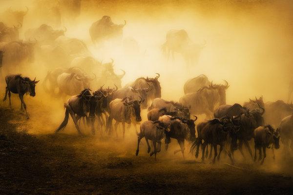 Фотографии миграции животных