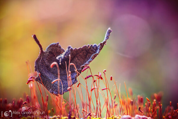 Волшебство осени в фотографиях Александры Гриншпун