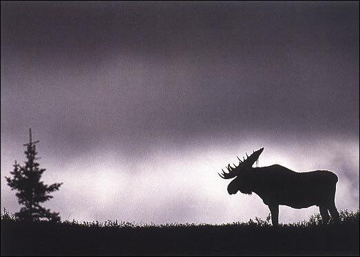 Гайд для фотографов дикой природы: работаем с композицией