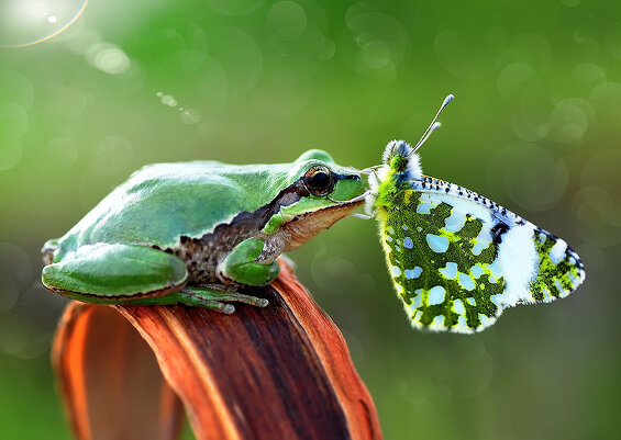 Животные с бабочками