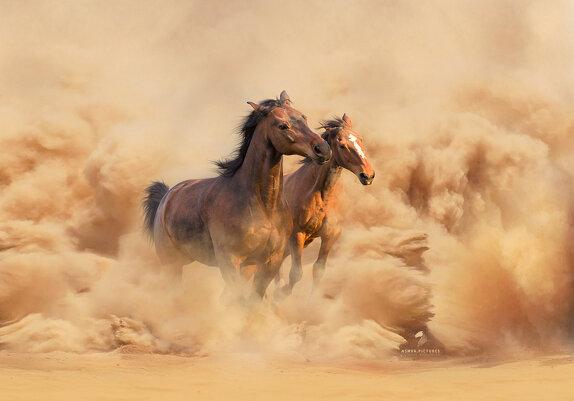 Грация и изящество лошадей