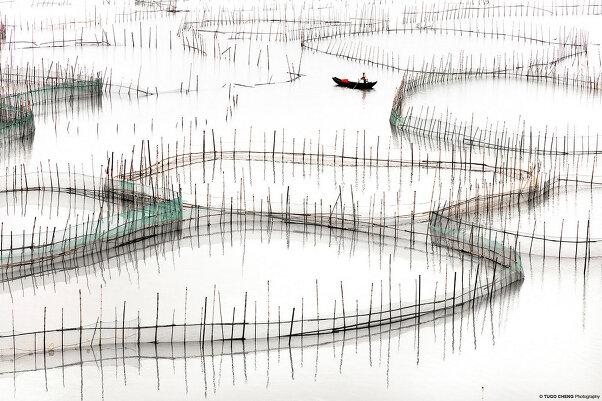Туго Ченг  «Прибрежная геометрия»