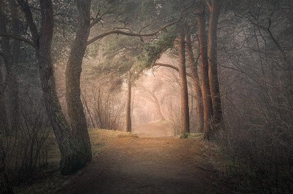 Семь советов как фотографировать в лесу
