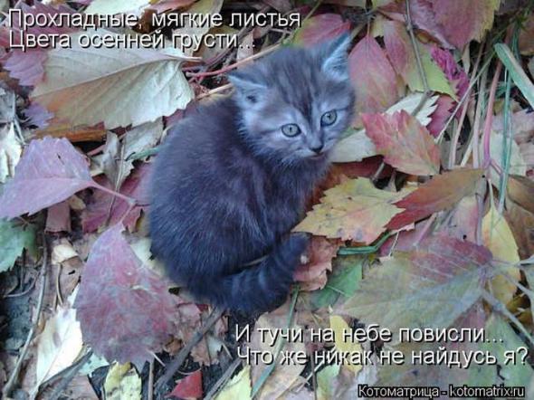 фото кота покажи мне сиськи