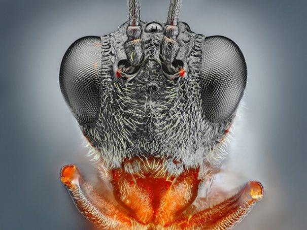 Рыльце в пыльце(фото:Tomas Rak)