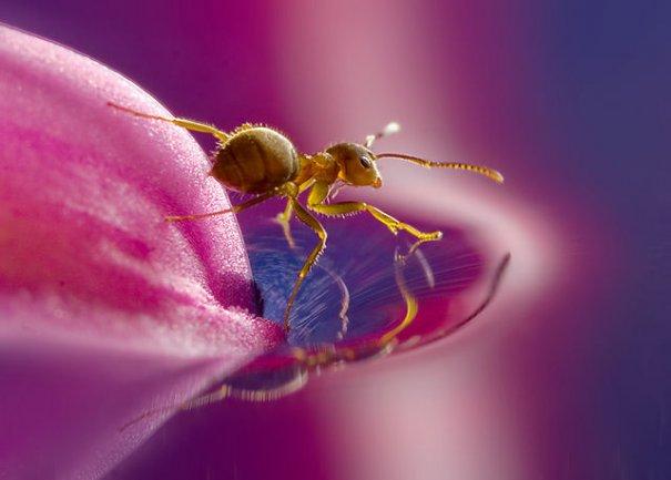 """Жизнь в розовом цвете""(фото:Leon Baas)"