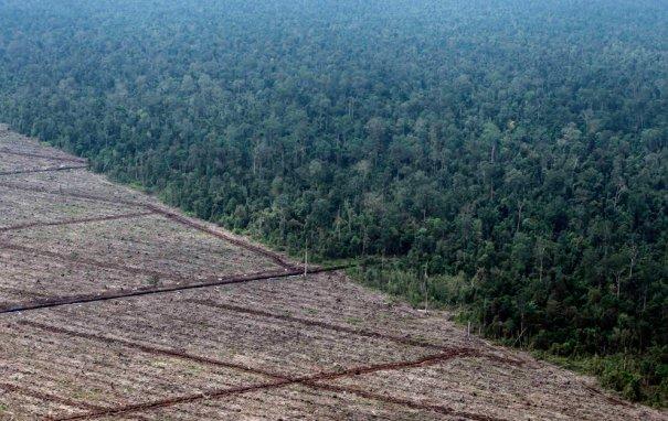 о.Суматра, фото:Beawiharta