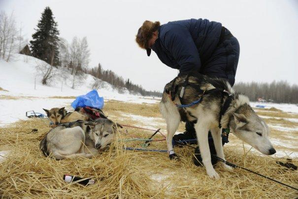 подготовка собак к соревнованиям(фото:Marc Lester)