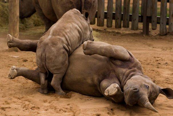 парк Квазулу-Натал, Юж.Африка, малыш играет с матерью