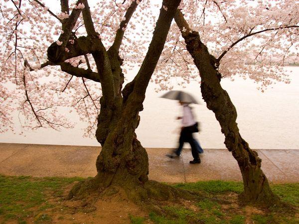 Вашингтон, округ Колумбия, фото:Charles M. Kogod