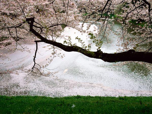 фото: Michael S. Yamashita