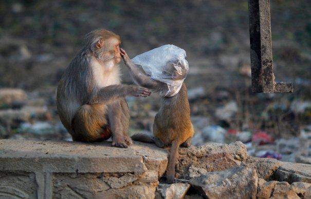 фото:Saurabh Das