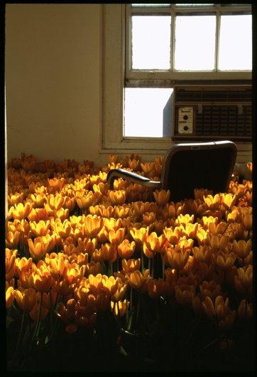 """проект """"Bloom"""""""
