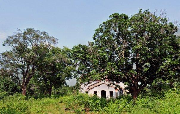 фото:Manjunath Kiran