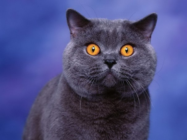 Шокированная кошка