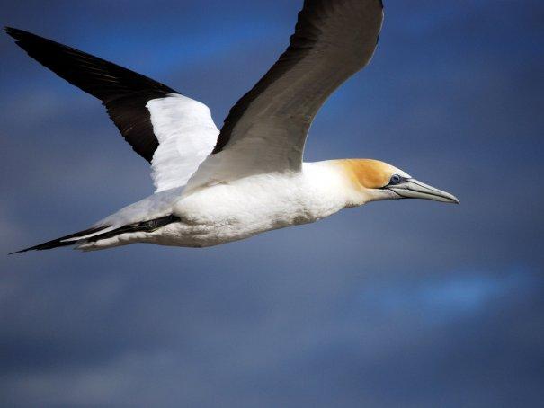 Парящая над морем чайка