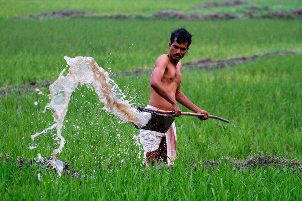 фото:Anupam Nath