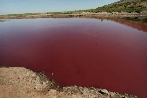 """Красное море"" - вот  оно какое!, фото: Scott Olson"