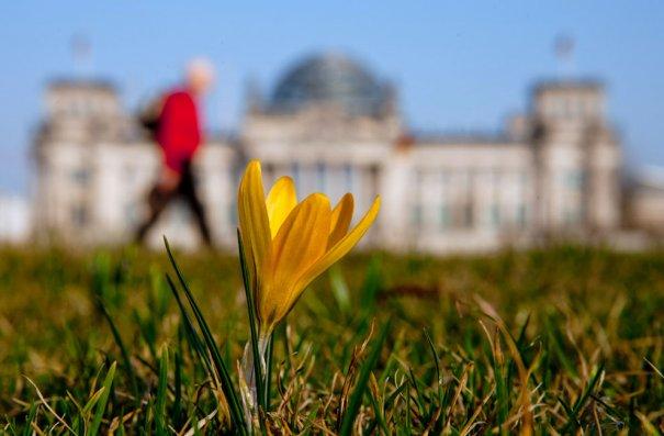 Первые весенние цветы на лужайке, Рейхстаг, Берлин (фото:Thomas Peter)