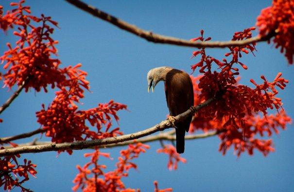 Птицы возвращаются на родину с теплых стран (фото:Sushanta Das)