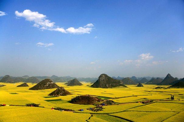 Рапсовые поля, провинция Юньнань, Китай.
