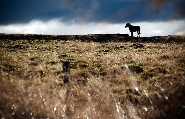 фото:Paul Taggart