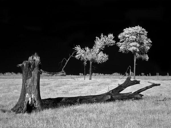 """""""Светлая ночь"""", Висконсин, фото: Shane Rucker"""