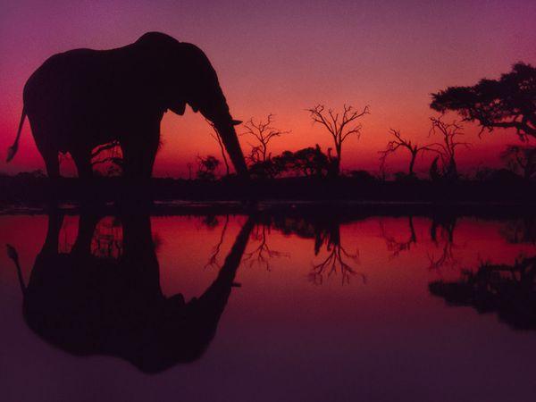 Слон на водопое, Ботсвана, фото:Frans Lanting
