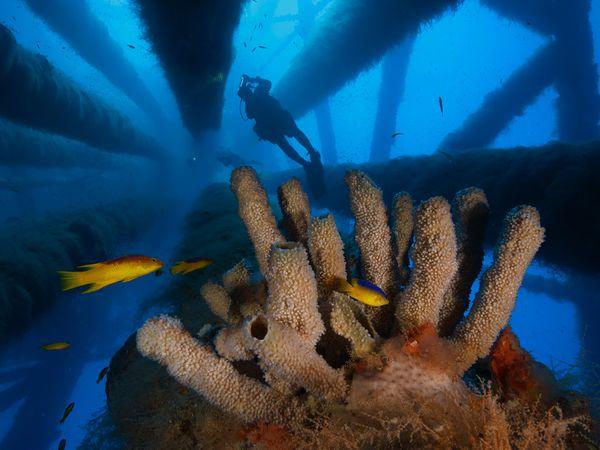 Коралловые сады, Мексиканский залив, фото:David Doubilet