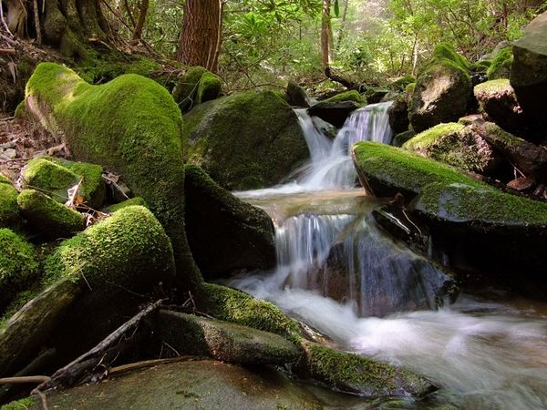 Водный поток, Северная Калифорния, фото: Amy White/Al Petteway