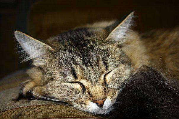 Претворяется что спит
