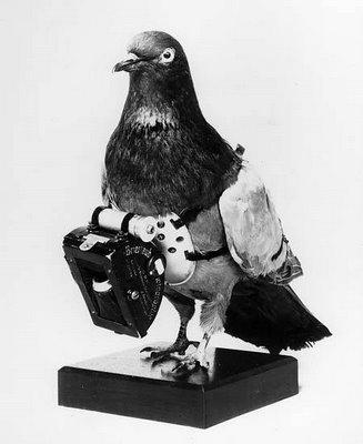 Когда и где голуби применялись для аэрофотосъёмки?