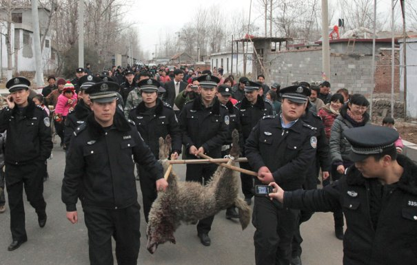 """""""С волками по-волчьи!"""" март 2012 года"""
