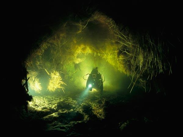"""""""Подводный сад"""", фото:David Doubilet"""