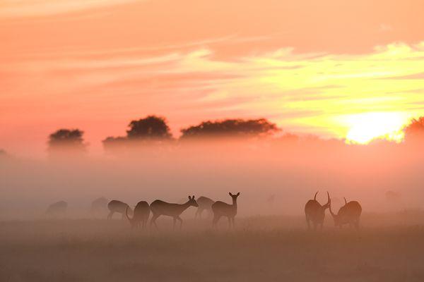 """""""Утренний завтрак"""", фото:  Michael Poliza"""