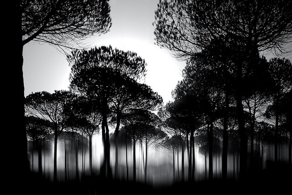 фотограф Chris Friel