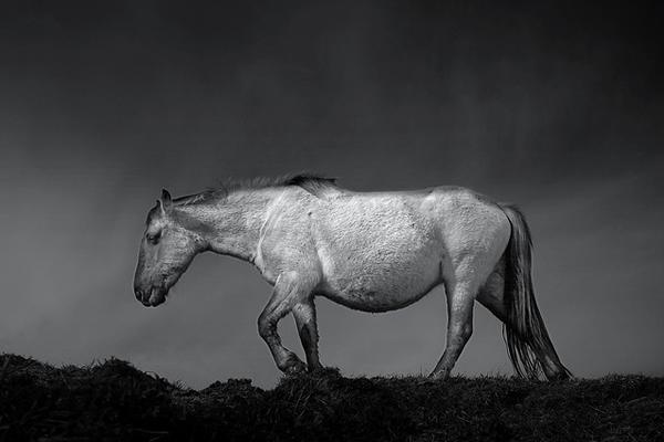 фотограф Chris Friel