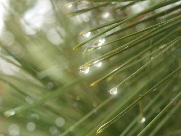 """""""The Scent of Pine"""", фото: Dovie Moon"""
