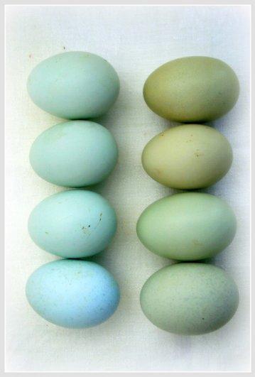 Светлый праздник ПАСХА: откуда он появился? Почему мы красим и разбиваем яйца? - №9